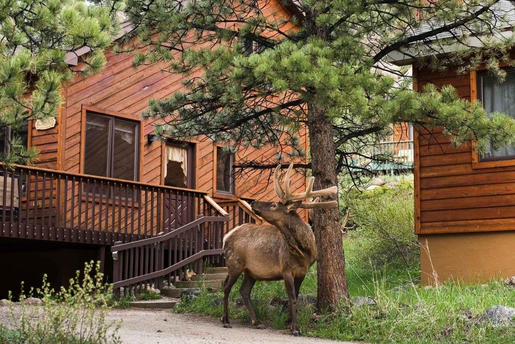 mountainside-lodging-aspen-brook-bull-elk