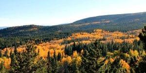 panorama-of-golden-aspens