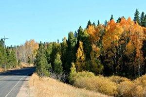 fall-colors-peak-to-peak-highway