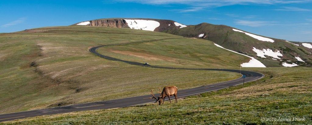 elk-grazing-trail-ridge-road