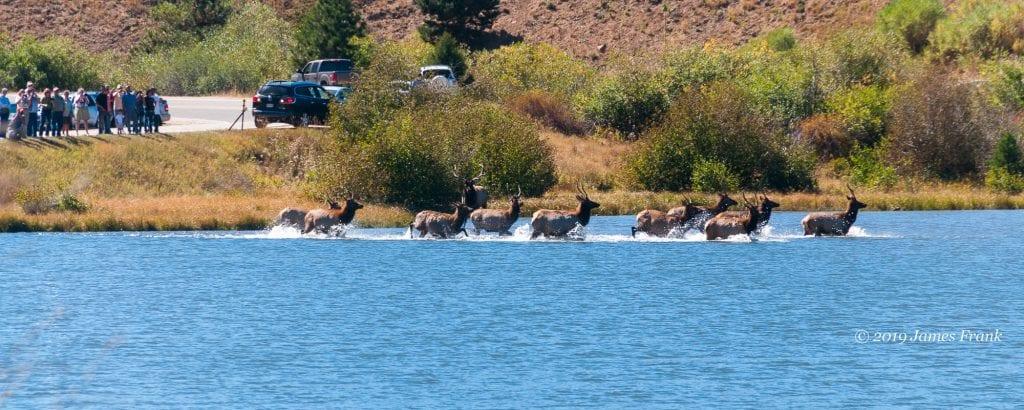elk-herd-lake-estes